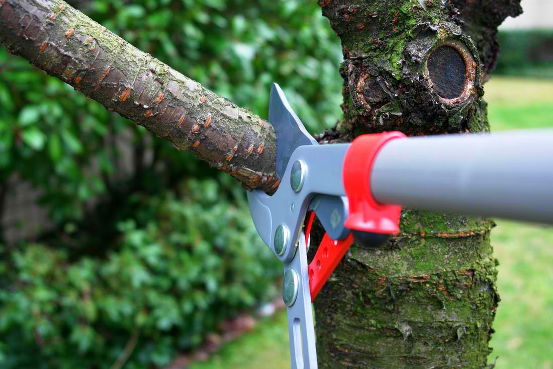Safety Tips For Tree Removal